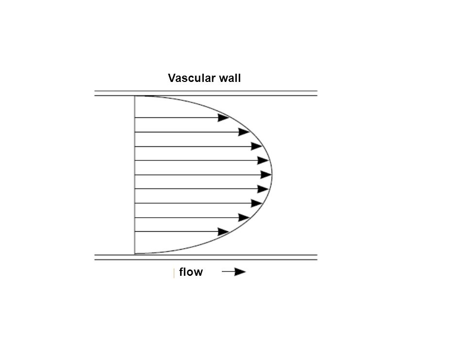 flow Vascular wall