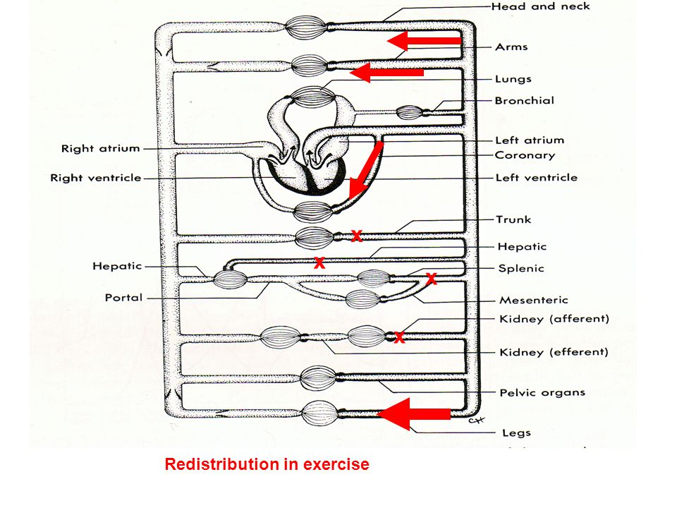 x x x Redistribution in exercise x