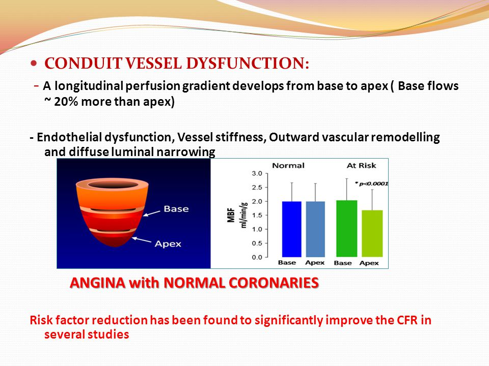 CONDUIT VESSEL DYSFUNCTION: - A longitudinal perfusion gradient develops from base to apex ( Base flows ~ 20% more than apex) - Endothelial dysfunctio