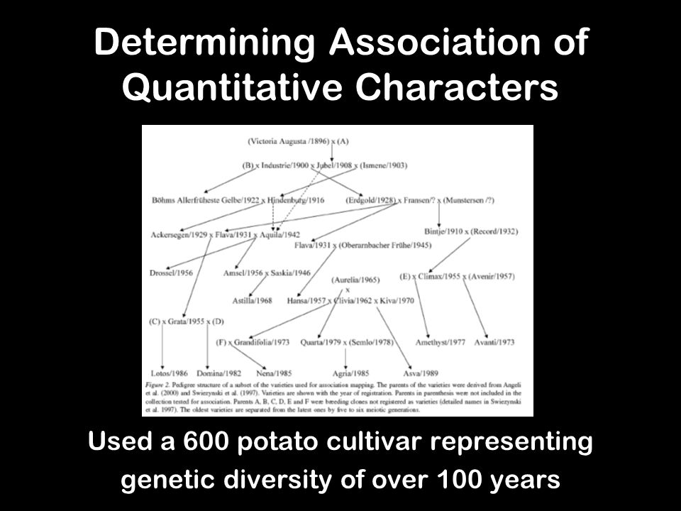 Determining Association of Quantitative Characters Used a 600 potato cultivar representing genetic diversity of over 100 years