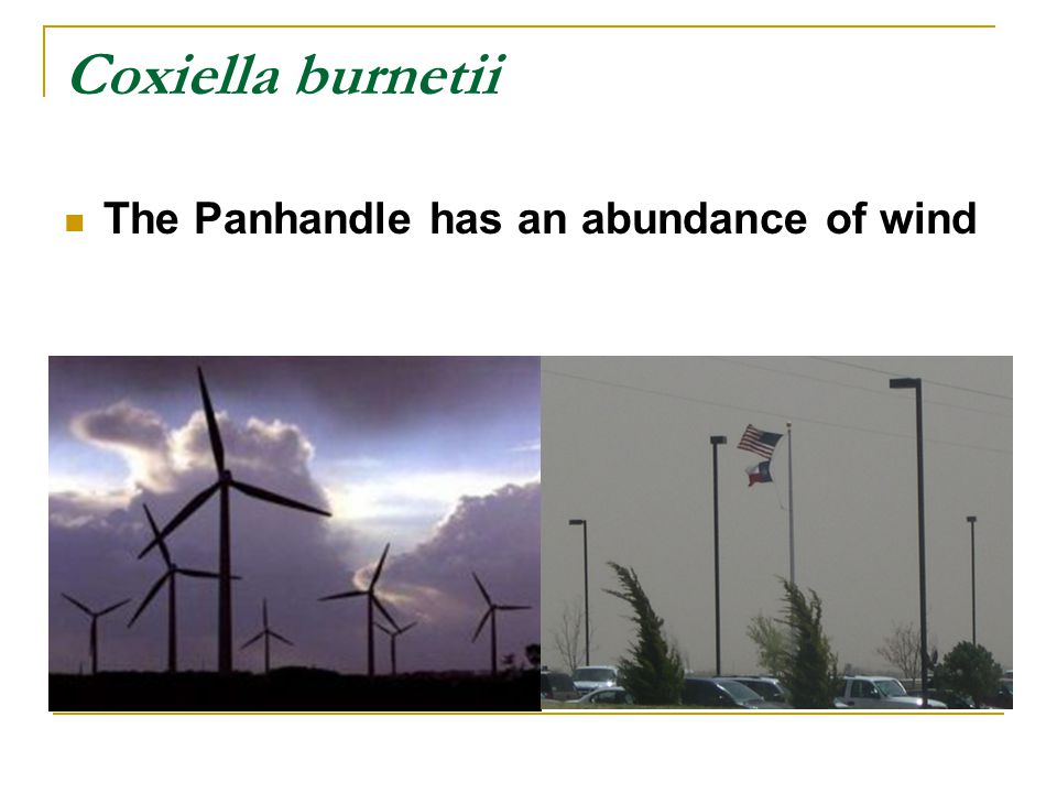 The Panhandle has an abundance of wind Coxiella burnetii
