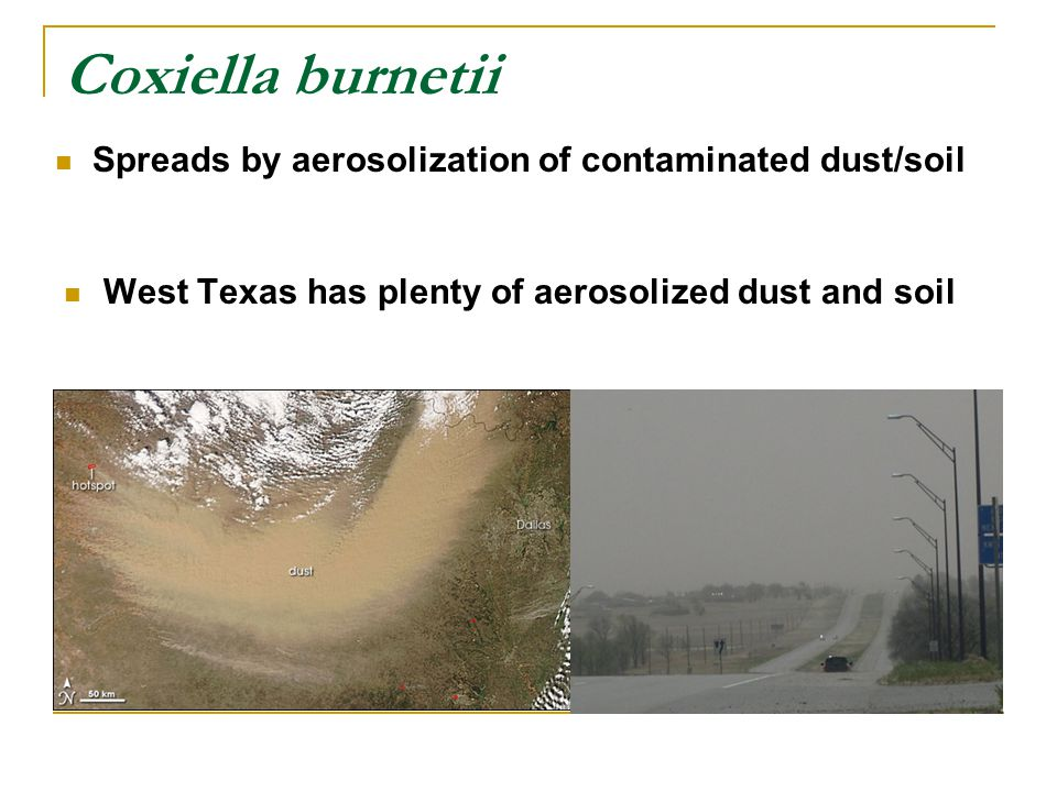 West Texas has plenty of aerosolized dust and soil Coxiella burnetii Spreads by aerosolization of contaminated dust/soil