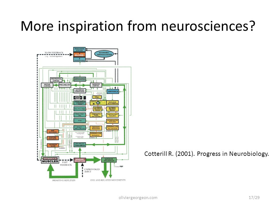 More inspiration from neurosciences? oliviergeorgeon.com Cotterill R. (2001). Progress in Neurobiology. 17/29