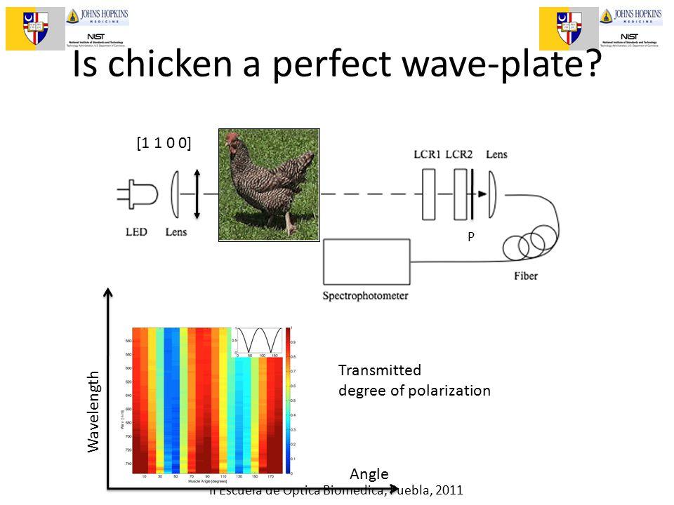 II Escuela de Optica Biomedica, Puebla, 2011 Is chicken a perfect wave-plate.