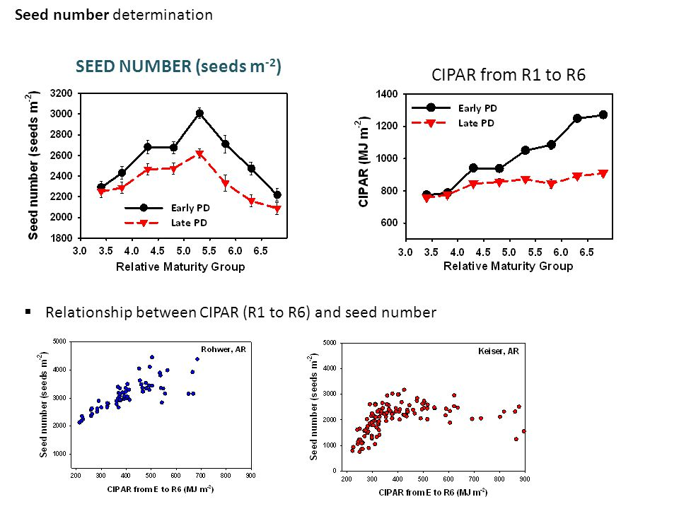 Seed number determination SEED NUMBER (seeds m -2 ) CIPAR from R1 to R6  Relationship between CIPAR (R1 to R6) and seed number