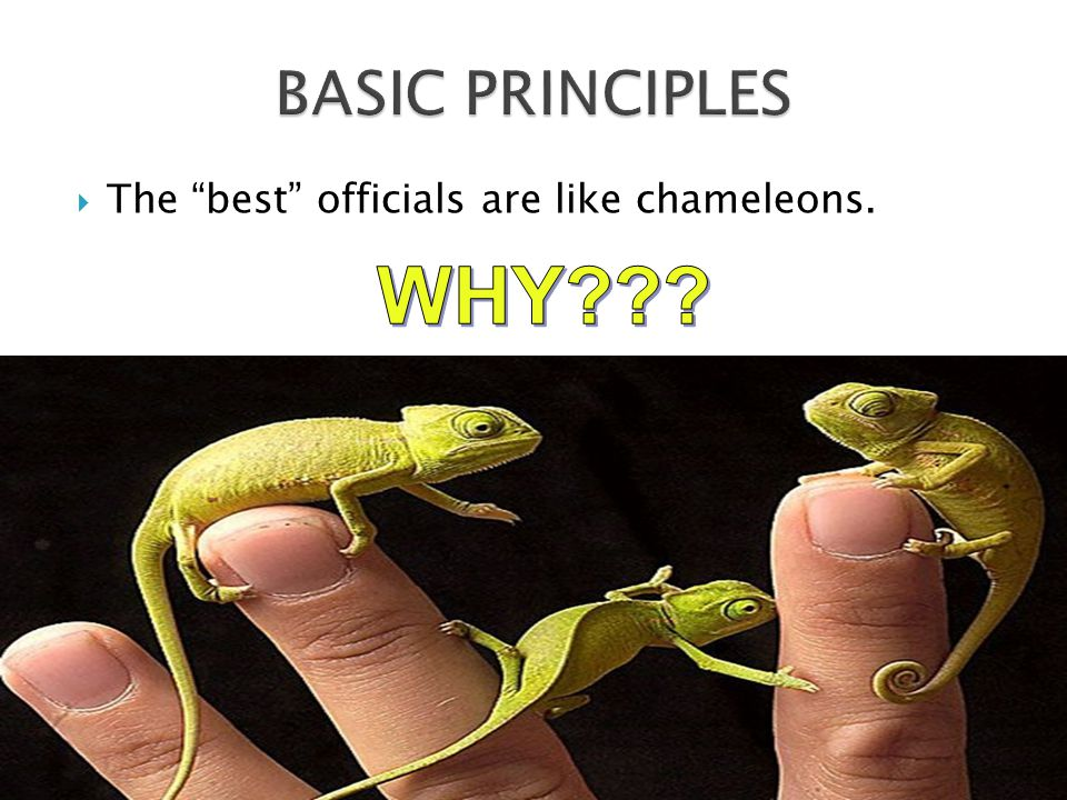  The best officials are like chameleons.