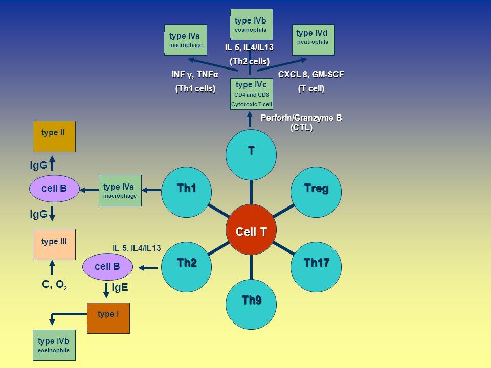 type IVa macrophage type IVd neutrophils type IVb eosinophils type IVa macrophage type II type III cell B type Itype IVb eosinophils cell B C, O 2 IgG