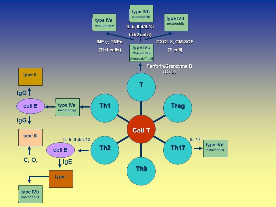 IgE IL 17 type IVa macrophage type IVd neutrophils type IVb eosinophils type IVa macrophage type II type III cell B type Itype IVb eosinophils type IV