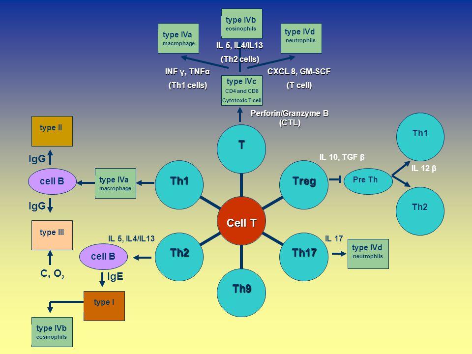 IL 17 IgE type IVa macrophage type IVd neutrophils type IVb eosinophils type IVa macrophage type II type III cell B type Itype IVb eosinophils type IV