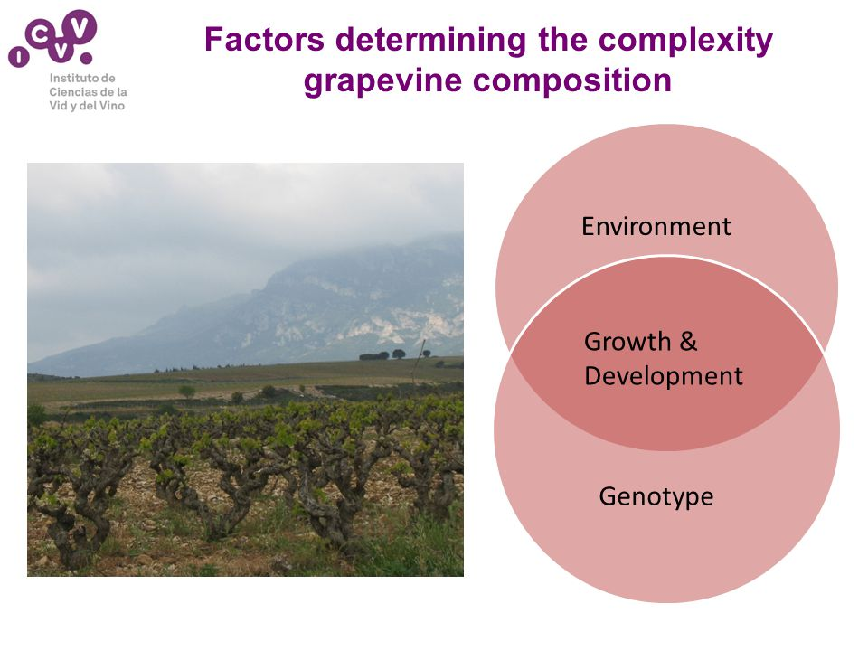 Factors determining the complexity grapevine composition Environment Growth & Development Genotype