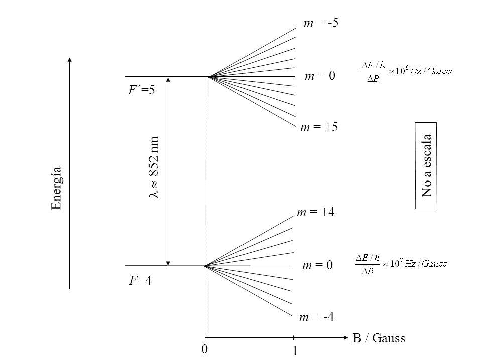 F=4 F´=5 m = +4 m = -4 m = 0 m = -5 m = +5 m = 0  852 nm 0 1 B / Gauss No a escala Energía