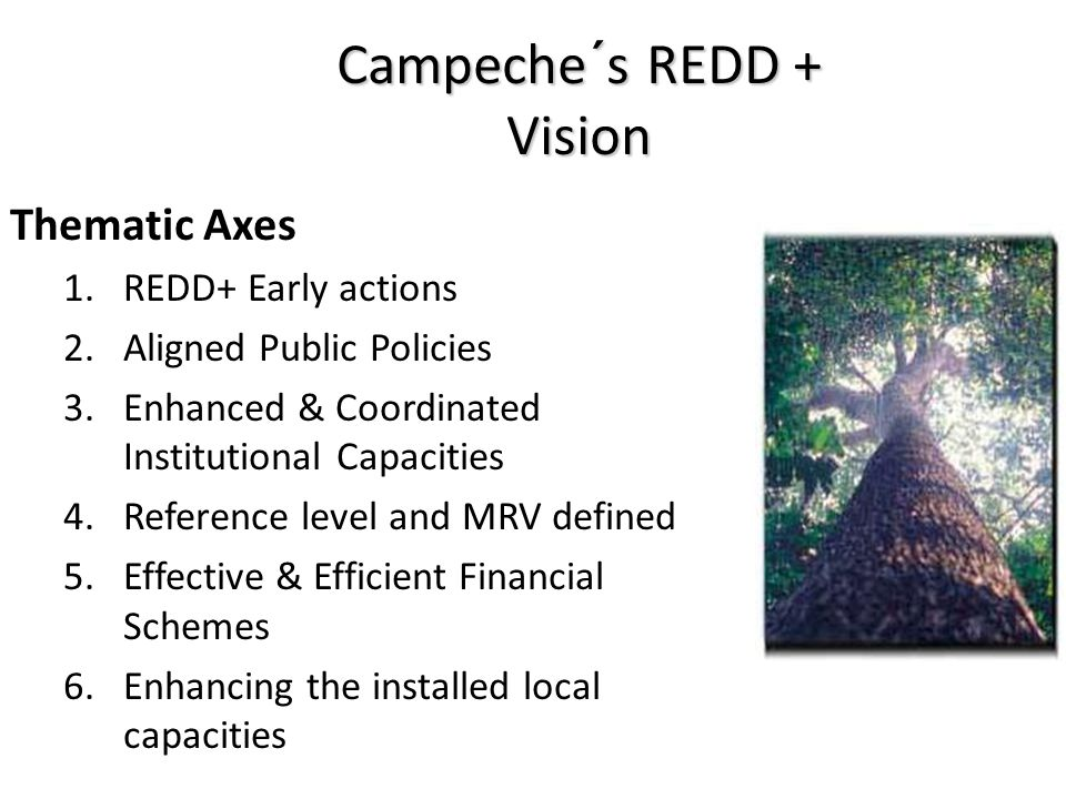 Campeche´s REDD + Vision Thematic Axes 1.REDD+ Early actions 2.Aligned Public Policies 3.Enhanced & Coordinated Institutional Capacities 4.Reference level and MRV defined 5.Effective & Efficient Financial Schemes 6.Enhancing the installed local capacities
