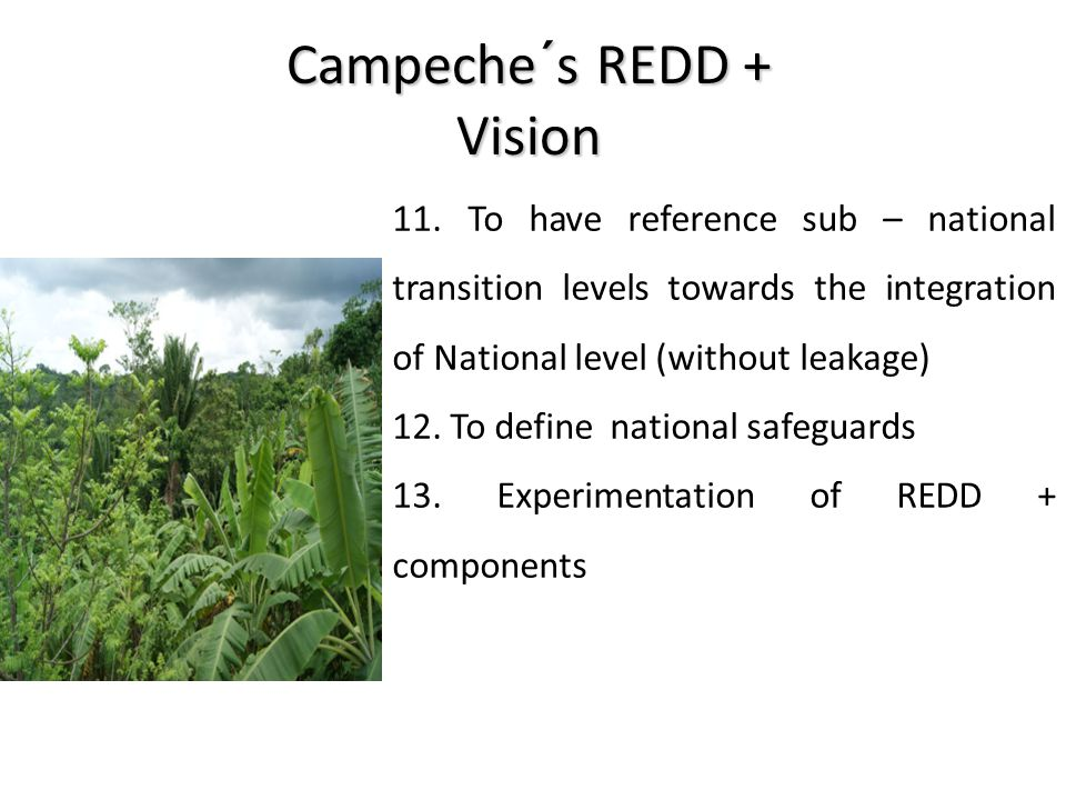 Campeche´s REDD + Vision 11. To have reference sub – national transition levels towards the integration of National level (without leakage) 12. To def