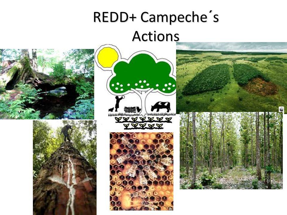REDD+ Campeche´s Actions