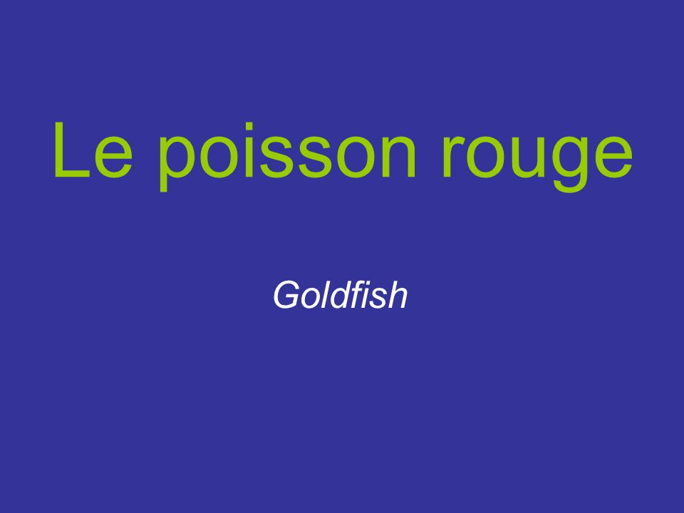 Le poisson rouge Goldfish