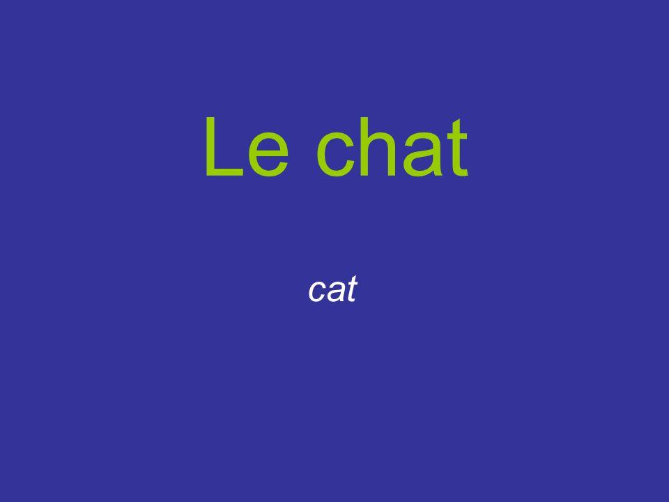 Le chat cat