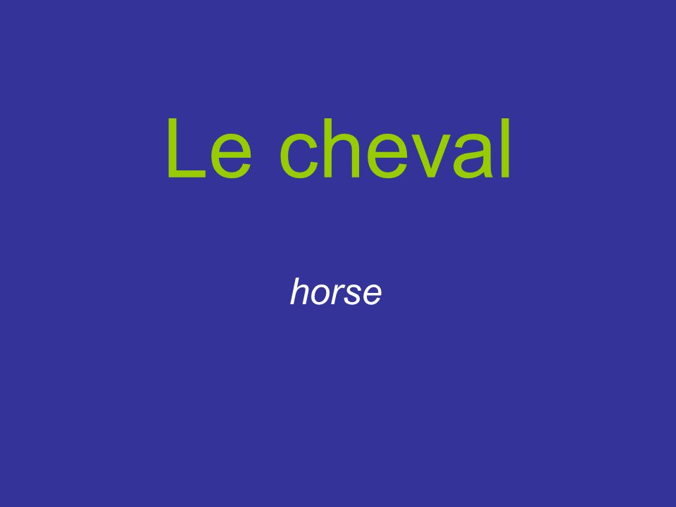 Le cheval horse