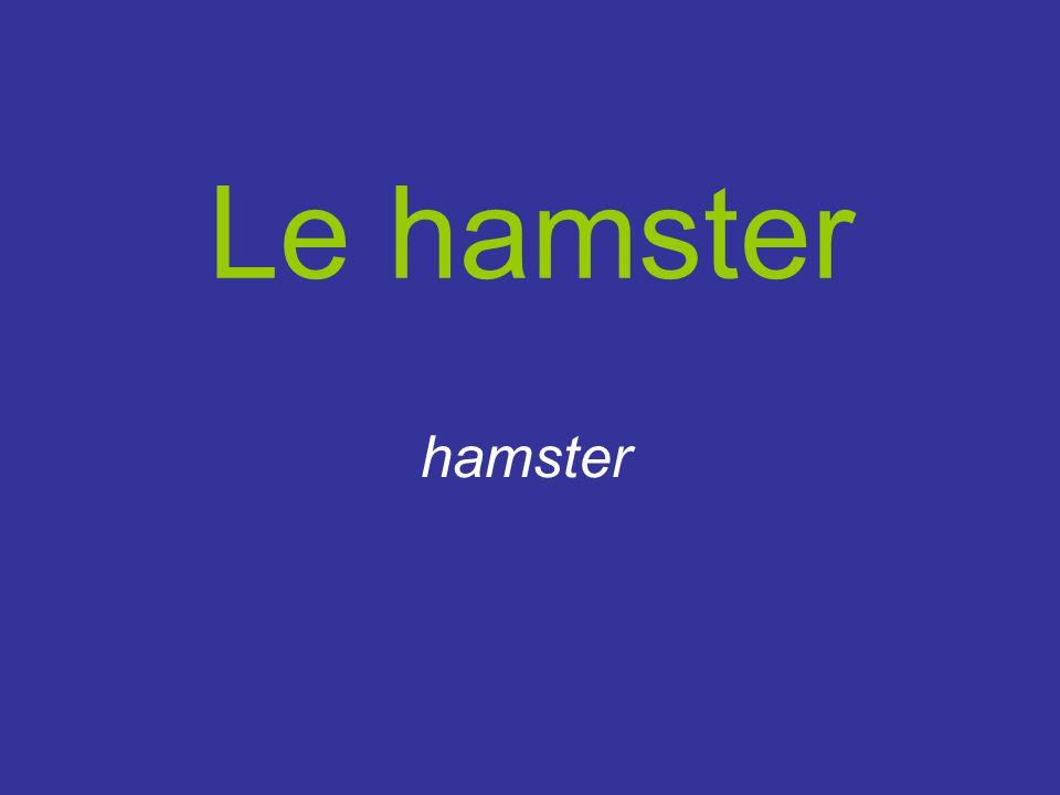 Le hamster hamster