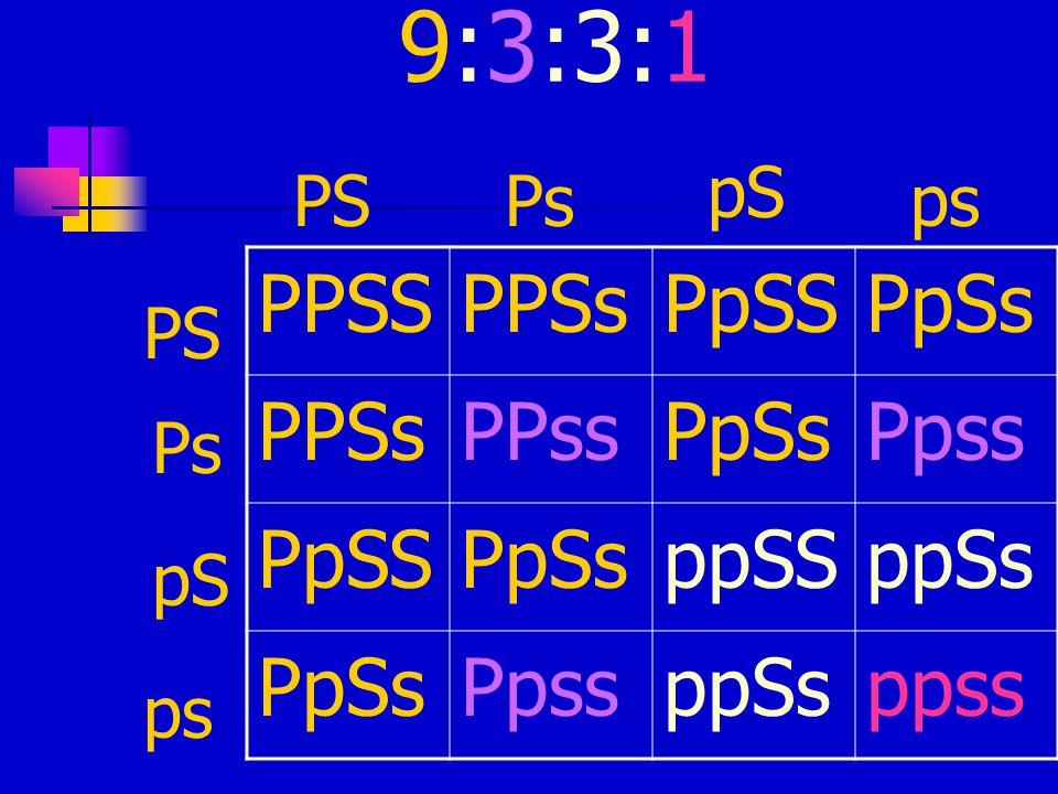 9:3:3:1 PPSSPPSsPpSSPpSs PPSsPPssPpSsPpss PpSSPpSsppSSppSs PpSsPpssppSsppss PSPs pS ps PS Ps pS ps
