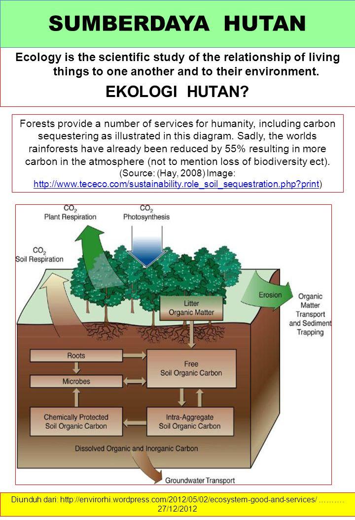 Ekosistem Hutan selalu berubah, tidak pernah berhenti proses perubahannya.