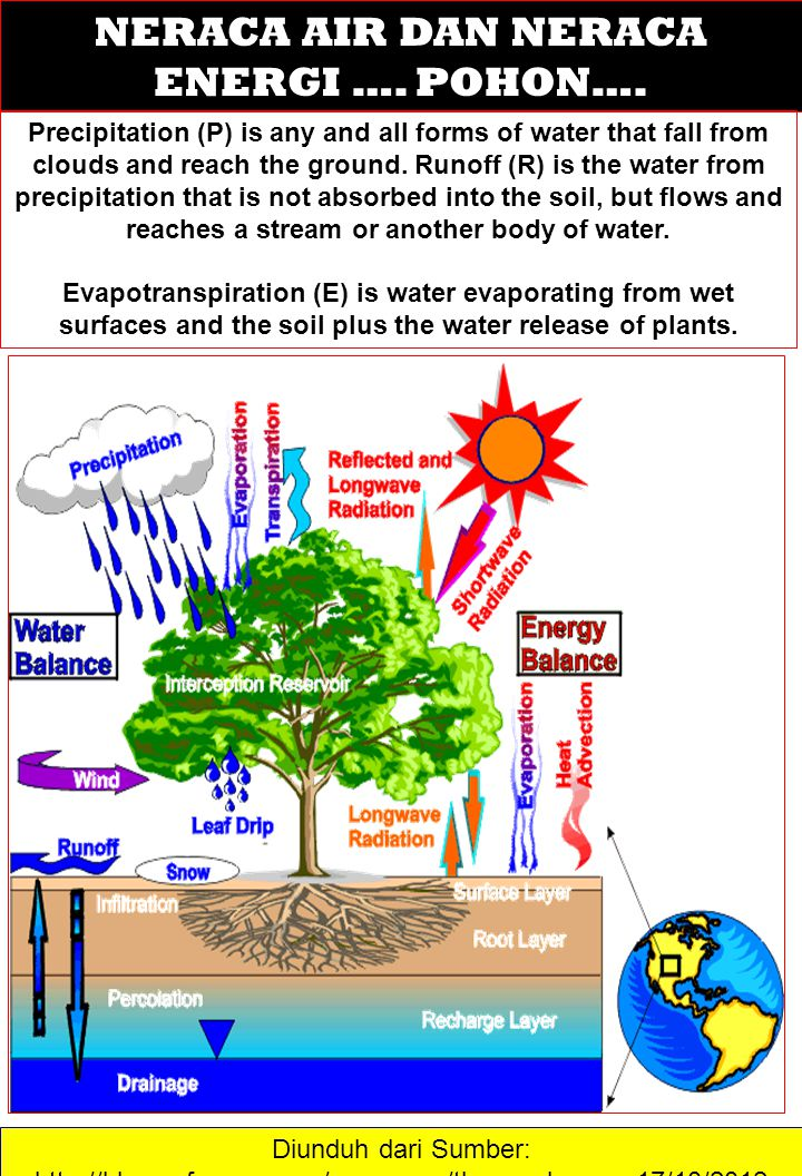 HUTAN Ecology is the study of the complex interactions between the organic and inorganic elements of a forest ecosystem.