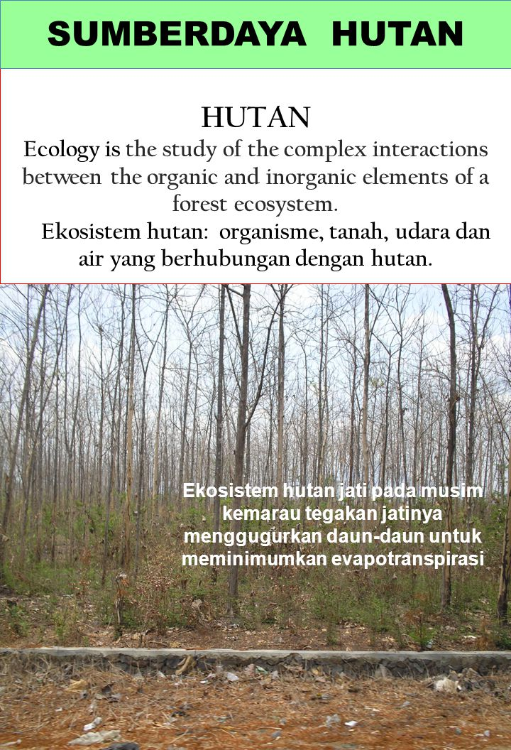 HUTAN Ecology is the study of the complex interactions between the organic and inorganic elements of a forest ecosystem. Ekosistem hutan: organisme, t