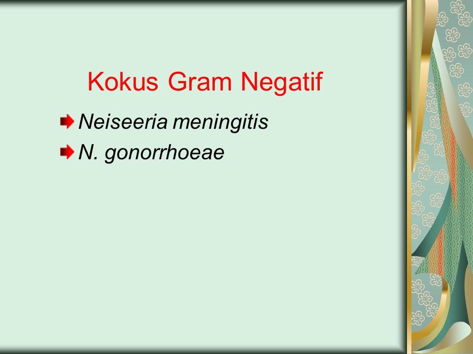 Kokus Gram Negatif Neiseeria meningitis N. gonorrhoeae