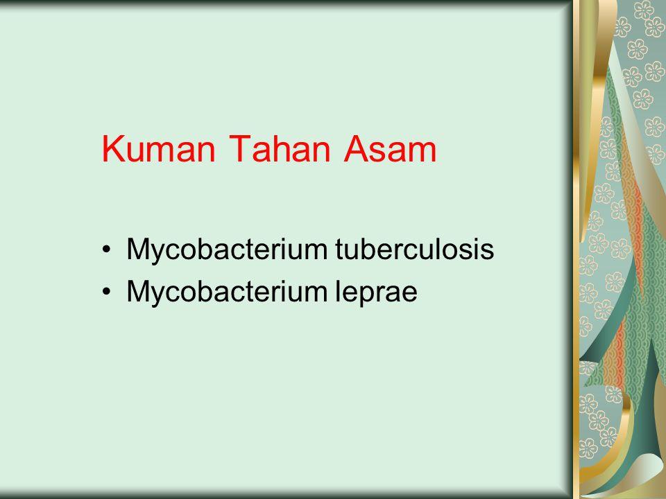 Kuman Tahan Asam Mycobacterium tuberculosis Mycobacterium leprae