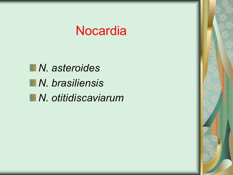Nocardia N. asteroides N. brasiliensis N. otitidiscaviarum