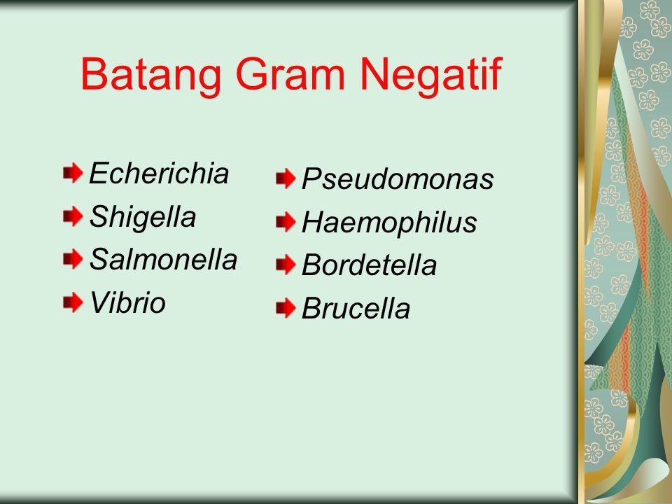 Batang Gram Negatif Echerichia Shigella Salmonella Vibrio Pseudomonas Haemophilus Bordetella Brucella