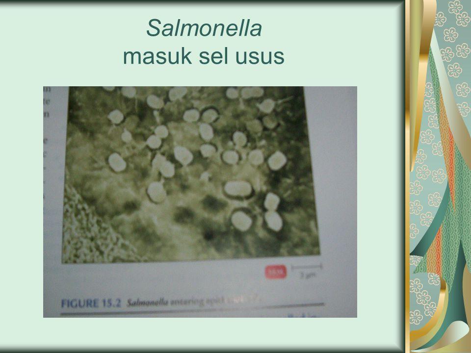 Salmonella masuk sel usus