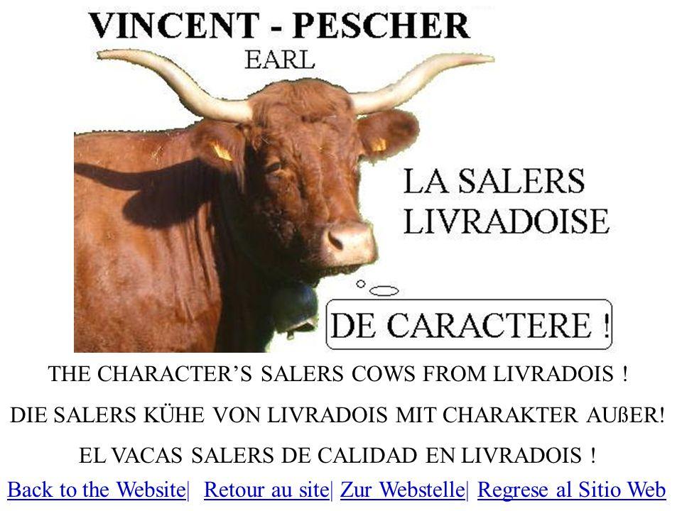 THE CHARACTER'S SALERS COWS FROM LIVRADOIS .DIE SALERS KÜHE VON LIVRADOIS MIT CHARAKTER AUßER.