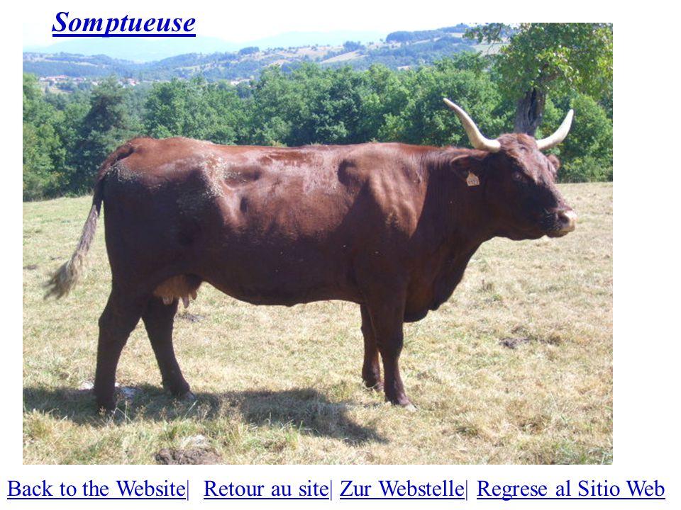Somptueuse Back to the WebsiteBack to the Website| Retour au site| Zur Webstelle| Regrese al Sitio WebRetour au siteZur WebstelleRegrese al Sitio Web