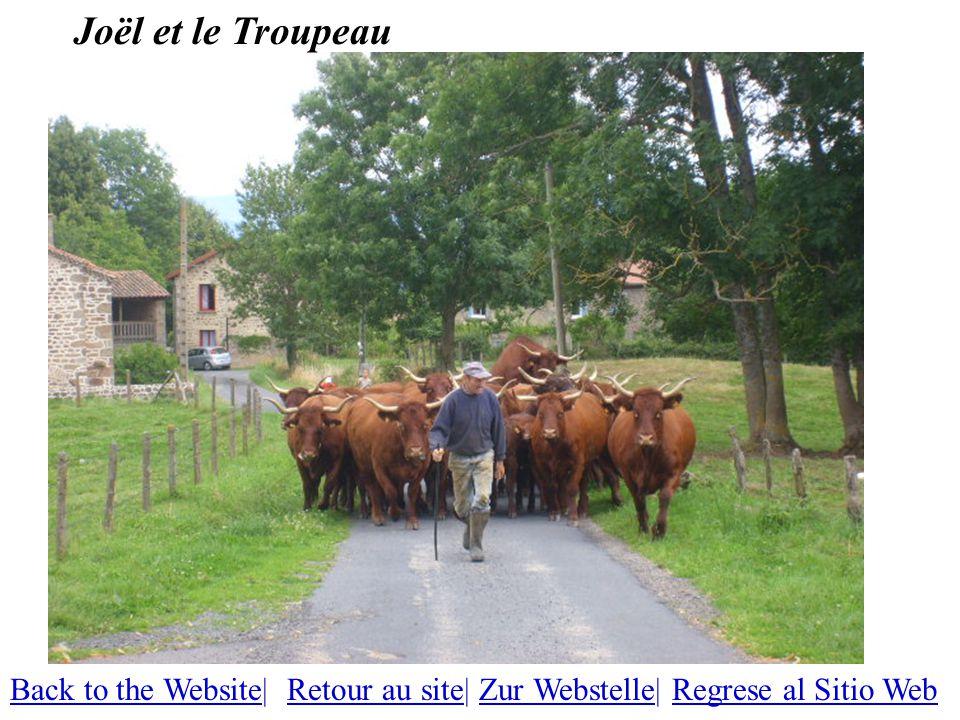 Joël et le Troupeau Back to the WebsiteBack to the Website| Retour au site| Zur Webstelle| Regrese al Sitio WebRetour au siteZur WebstelleRegrese al Sitio Web