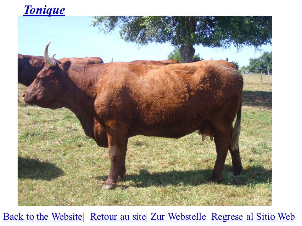 Tonique Back to the WebsiteBack to the Website| Retour au site| Zur Webstelle| Regrese al Sitio WebRetour au siteZur WebstelleRegrese al Sitio Web