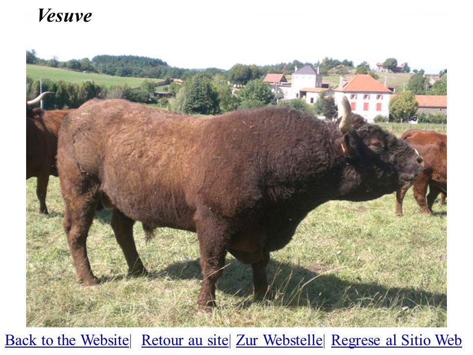 Vesuve Back to the WebsiteBack to the Website| Retour au site| Zur Webstelle| Regrese al Sitio WebRetour au siteZur WebstelleRegrese al Sitio Web