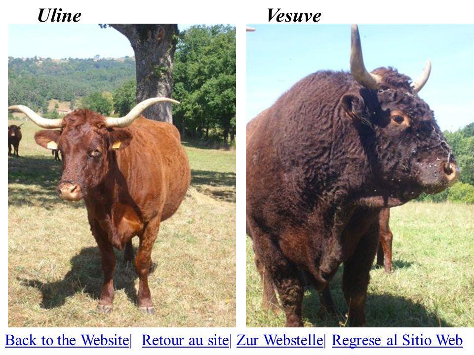 VesuveUline Back to the WebsiteBack to the Website| Retour au site| Zur Webstelle| Regrese al Sitio WebRetour au siteZur WebstelleRegrese al Sitio Web