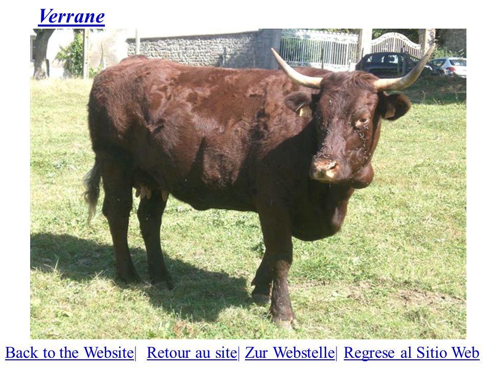 Verrane Back to the WebsiteBack to the Website| Retour au site| Zur Webstelle| Regrese al Sitio WebRetour au siteZur WebstelleRegrese al Sitio Web