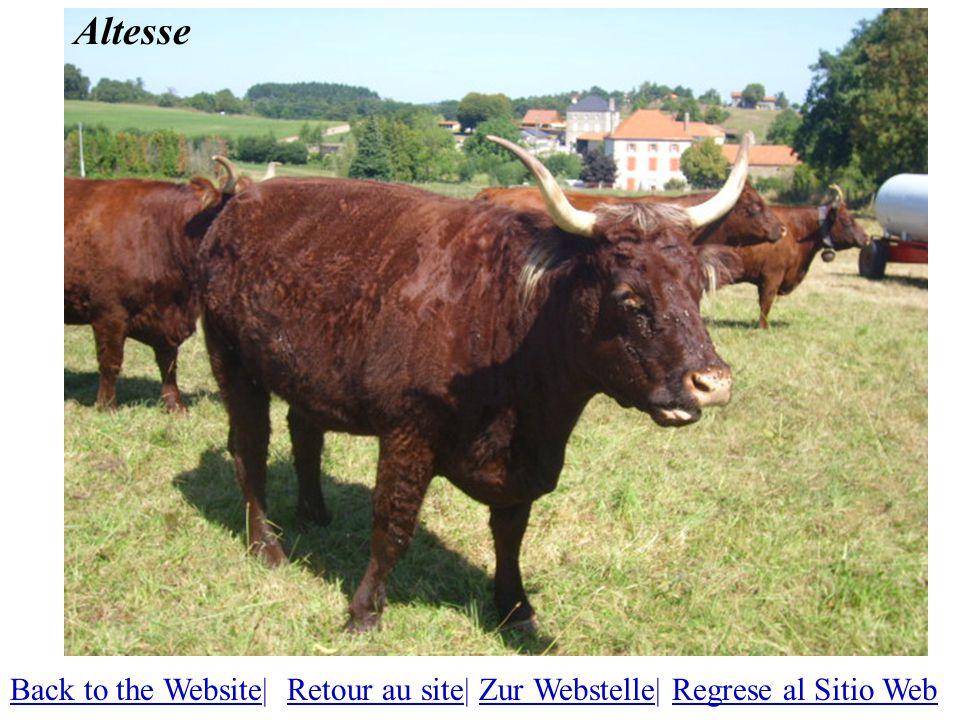 Altesse Back to the WebsiteBack to the Website| Retour au site| Zur Webstelle| Regrese al Sitio WebRetour au siteZur WebstelleRegrese al Sitio Web