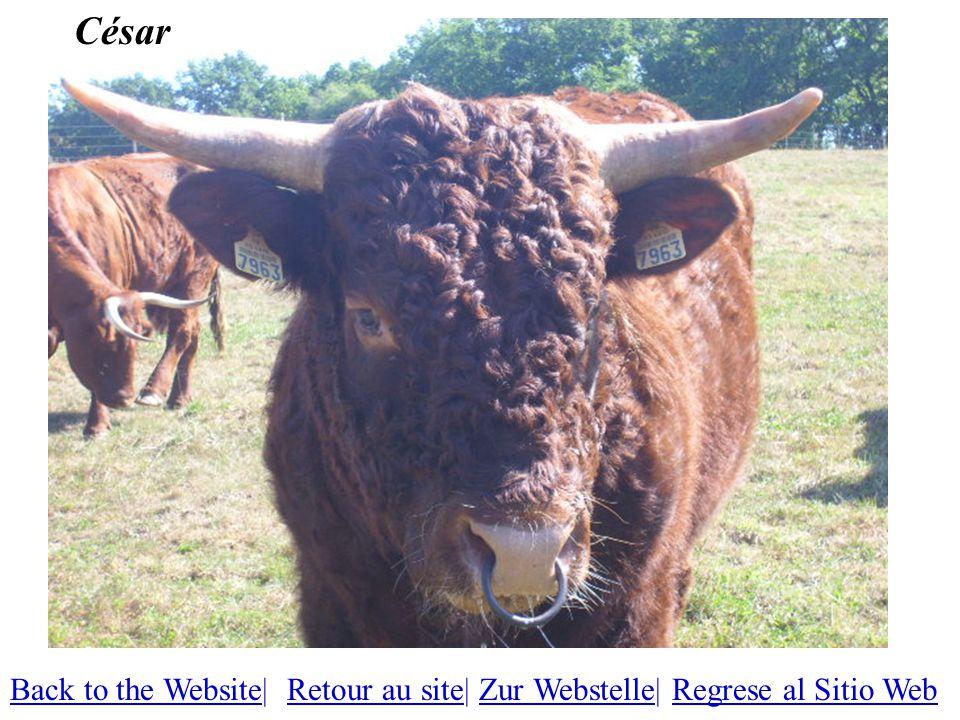 César Back to the WebsiteBack to the Website| Retour au site| Zur Webstelle| Regrese al Sitio WebRetour au siteZur WebstelleRegrese al Sitio Web