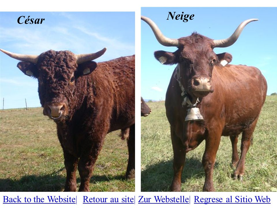 César Neige Back to the WebsiteBack to the Website| Retour au site| Zur Webstelle| Regrese al Sitio WebRetour au siteZur WebstelleRegrese al Sitio Web