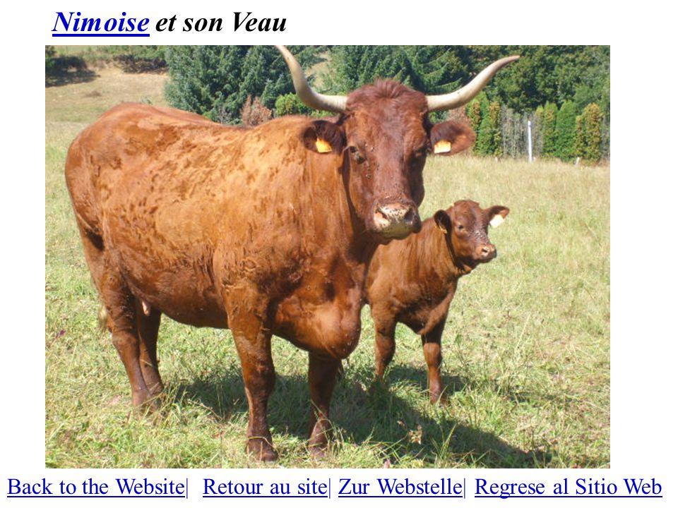 NimoiseNimoise et son Veau Back to the WebsiteBack to the Website| Retour au site| Zur Webstelle| Regrese al Sitio WebRetour au siteZur WebstelleRegrese al Sitio Web