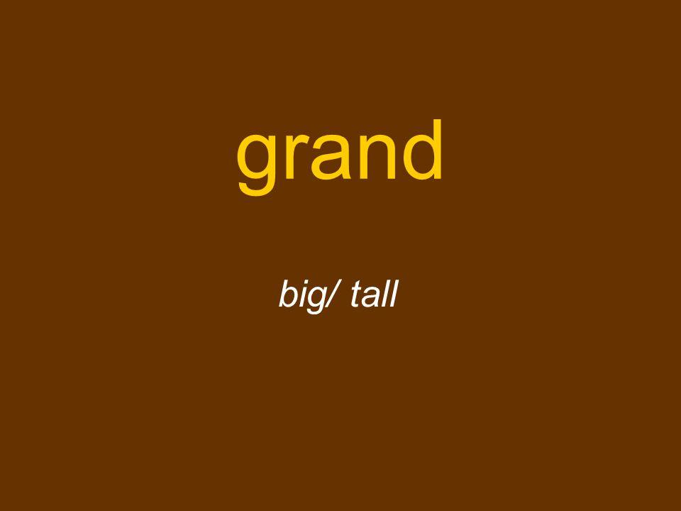 grand big/ tall