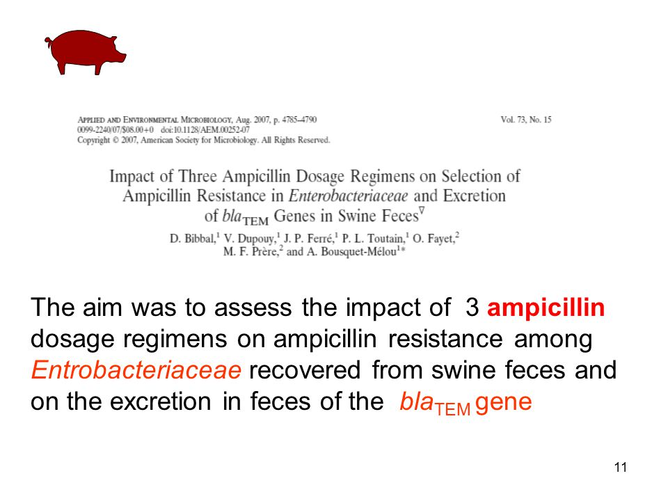 11 The aim was to assess the impact of 3 ampicillin dosage regimens on ampicillin resistance among Entrobacteriaceae recovered from swine feces and on