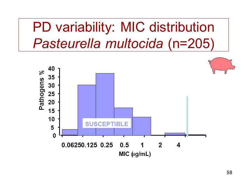 58 PD variability: MIC distribution Pasteurella multocida (n=205) 0 MIC (  g/mL) 5 10 15 20 25 30 35 40 0.06250.1250.250.5124 Pathogens % SUSCEPTIBLE