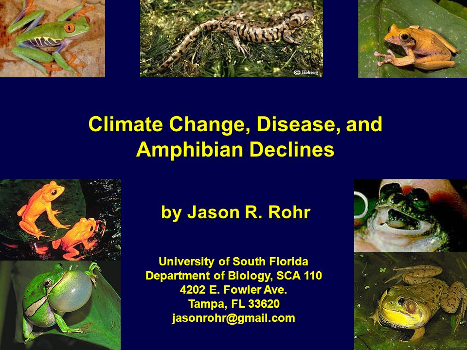 Climate Change, Disease, and Amphibian Declines by Jason R.