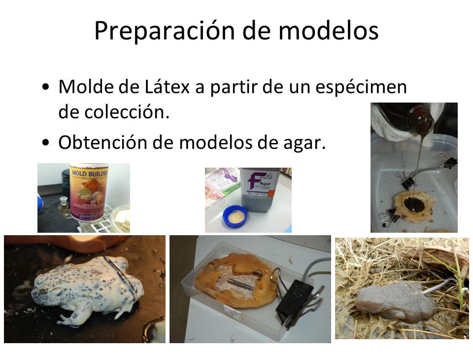 Preparación de modelos Molde de Látex a partir de un espécimen de colección.