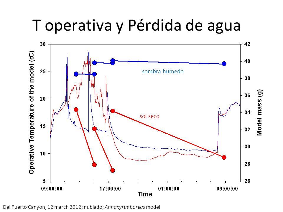 T operativa y Pérdida de agua sol seco sombra húmedo Del Puerto Canyon; 12 march 2012; nublado; Annaxyrus boreas model