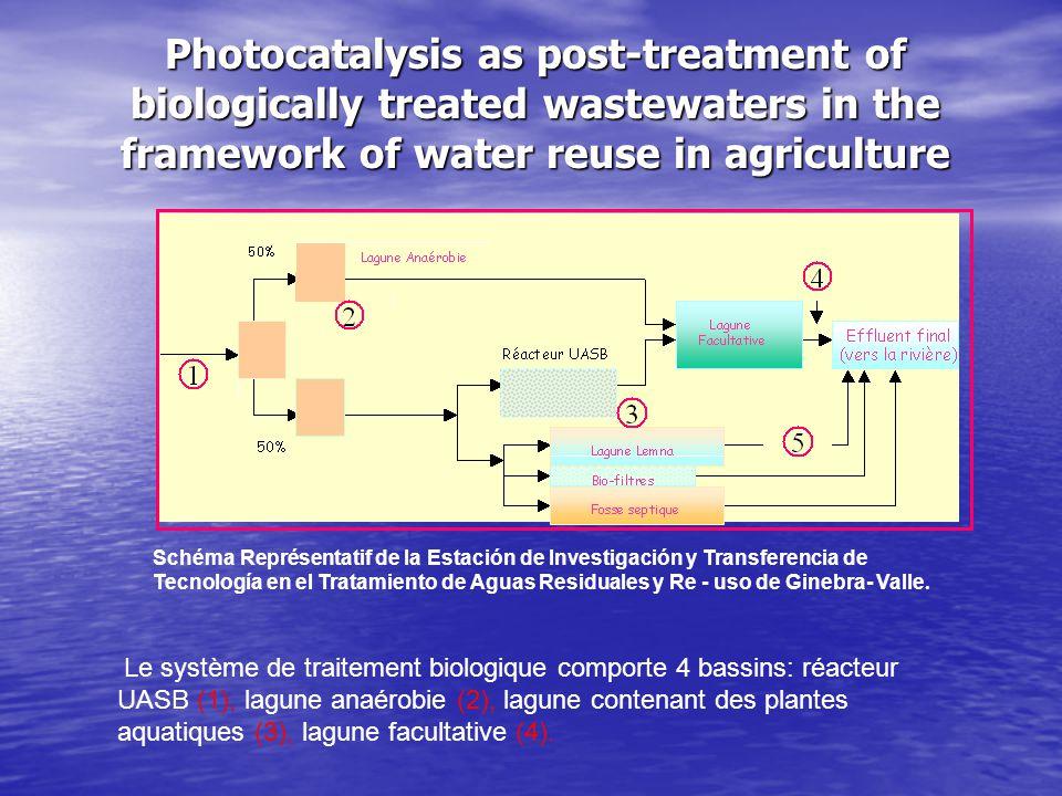 Photocatalysis as post-treatment of biologically treated wastewaters in the framework of water reuse in agriculture Le système de traitement biologique comporte 4 bassins: réacteur UASB (1), lagune anaérobie (2), lagune contenant des plantes aquatiques (3), lagune facultative (4).