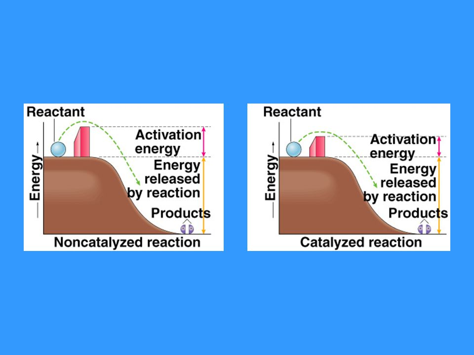 Exergonic reactions – give off energy Endergonic reactions – take up energy Reduction – gain e- or H + Oxidation – lose e- or H + Reducing agent – donates e- or H + to another molecule Oxidizing agent – accepts e- or H + from another molecule